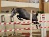 Winning Star e. Winningmood vd Arenberg m. Roshana M kåret DH med 7,5 og 8 på løshopning (Foto: Avlshest.no)