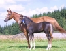 RR Lord of Rings e. Lord Caletto / Royal Z II, 2,5 mnd føllskue