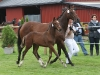 RR Pik King f. 2010 e. Tobajo Picez u. Shadar xx e. Viking xx FØLLFESTIVALEN 19.august (Foto: Avlshest.no)