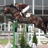 Salgshesten RR Lord of Rings' debut i 1.30 m