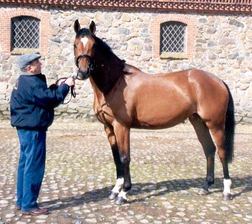 (Foto: B.Neergaard/Neergaard AS. Hesten er 3 år gammel på bildet)