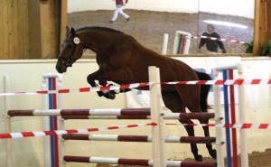 RR Landdorne - fløyhoppe og opptatt i DVs springprogram